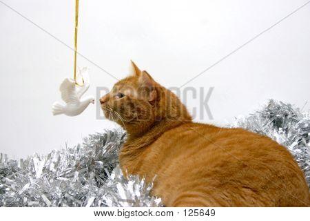 Christmas Kitty And Dove