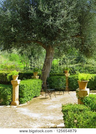 idyllic mediterranean garden with terrace chairs and olive tree