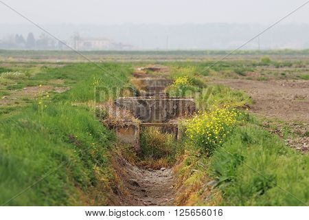 Rice crops sewer in Novara province Piedmont Italy