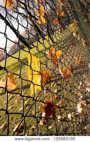leafs at wired fence autumn seson in Poland