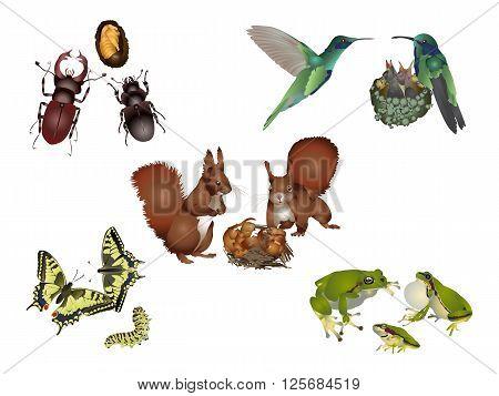 It is illustration of amazing nature set - animal family