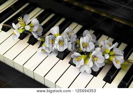 White quince on piano - condolence card