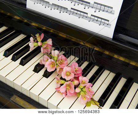 Quince tree in blossom on piano - condolence card