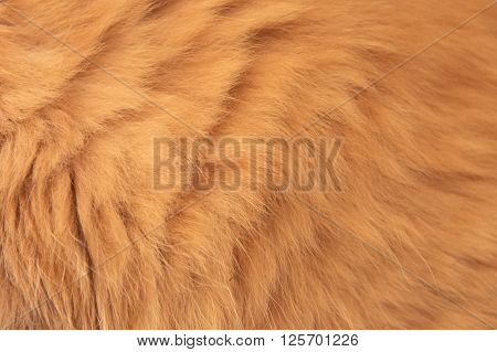 Red Cat Fur Background Texture Close up