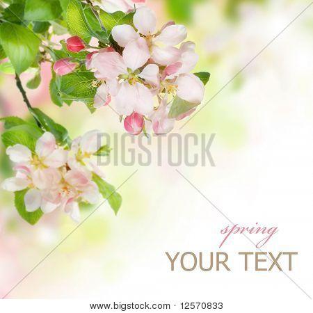 Frühjahr blühen Grenze