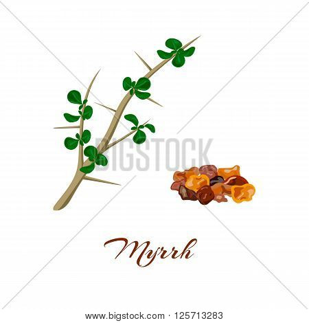 Myrrh tree. Leaves and resin. Commiphora myrrha. Vector illustration.