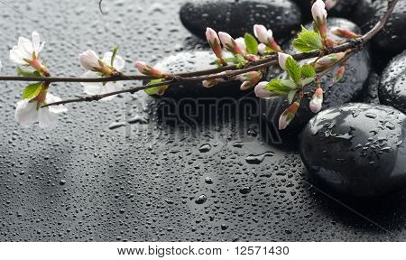Wet Zen Spa Stones and Sakura blossom