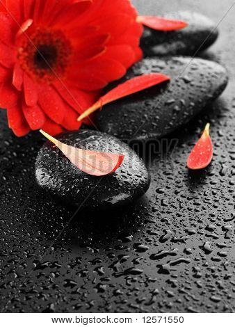 Wet Spa Stones and Red flower poster