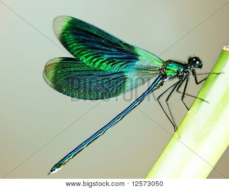 Beautiful bright Dragonfly poster