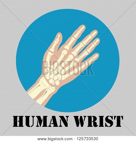 Human wrist joint emblem medicine clinic symbol design joints diagnostics center flat design logo vector