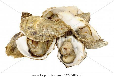 Group of fresh live oysters isolated on a white background