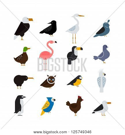 Birds vector set. Birds illustration. Egle and parrot. Pigeon and toucan. Bird collection. Penguins, flamingos. Crows and peacocks. Black grouse, chicken. Sofa and heron. Birds collection, vector bird