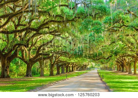 Charleston, South Carolina, USA tree lined plantation entrance.