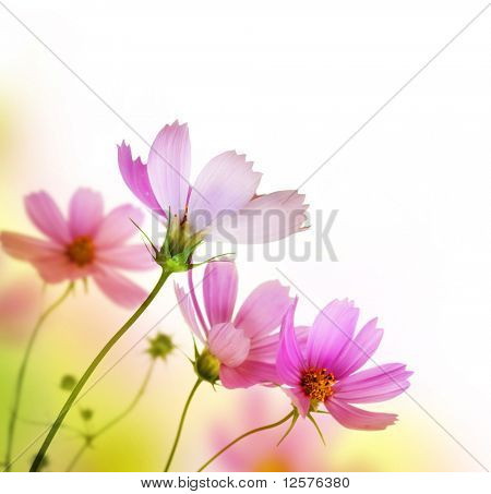 Beautiful Floral Border.Flower design