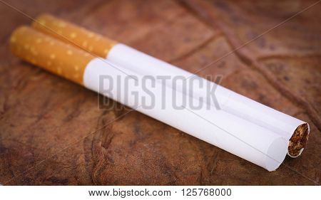 Closeup of filter cigarette on dry tobacco
