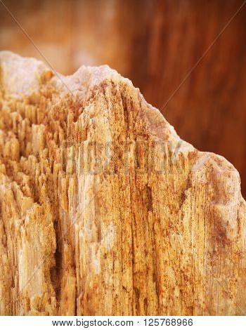 Close up of fossilized sedimentary rock stone ** Note: Shallow depth of field
