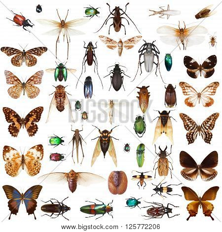 Set of insects on white background with clipping path