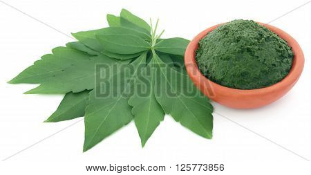 Mashed vitex Negundo or Medicinal Nishinda leaves over white backgroune