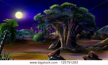 Large African baobab. Night View vith moon.