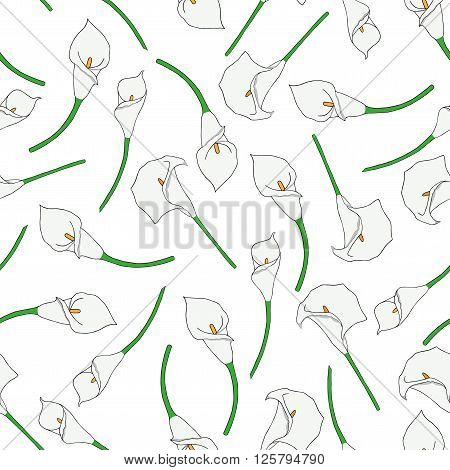 Seamless pattern with hand-drawn callas. No background
