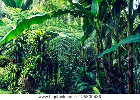 Lush tropical jungle. Image taken with D800 XXXL size convenient as large background