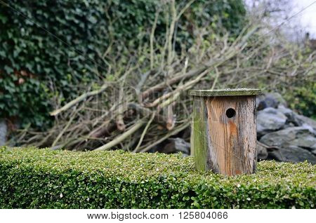 The birdhouse after  the winter on the hedge.