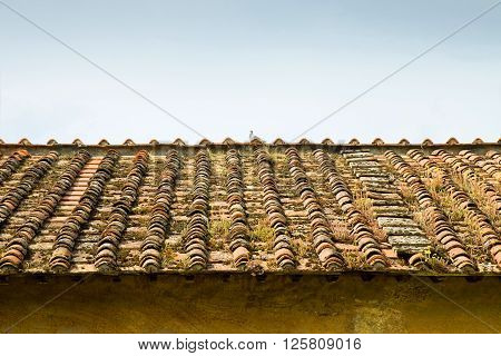 Old abandoned roof (Tuscany - Italy) - image with copy space