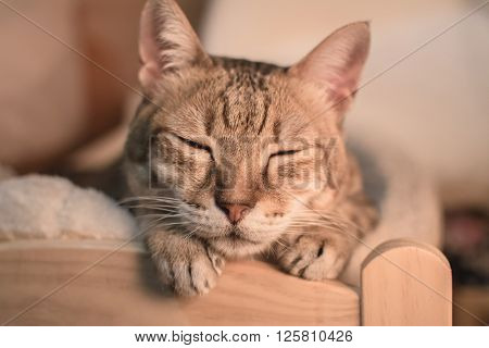 Cat dozed with funny expression on ground in room.