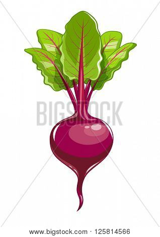Fresh beet with leaf. Vector illustration. Isolated white background. Juicy beetroot. vegetable. Organic food. Natural Root. Vegetable Ingredient for food
