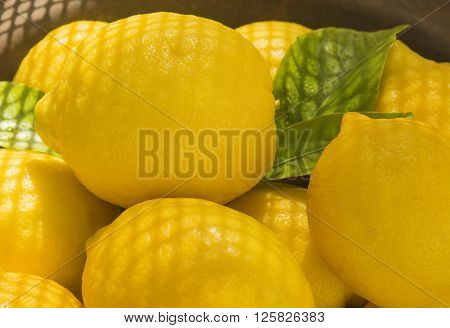 Close up of an Atmospheric image showing fresh organic lemons with summer sunshine and early evening shadows
