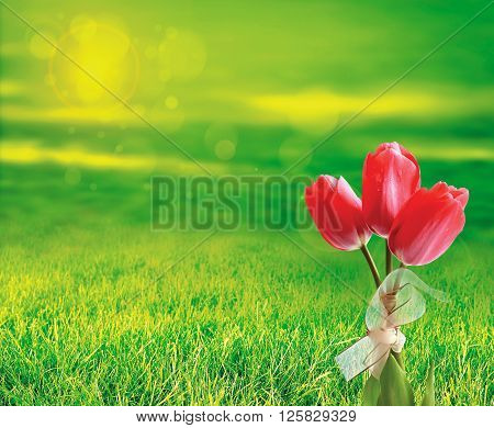 Red tulip bouquet on a green background