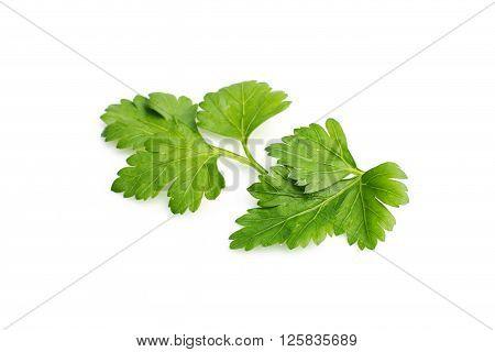 Fresh Parsley herb isolated on white background.