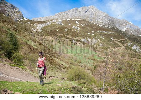 brunette sport hiker or trekking woman with red shirt green trousers walking or hiking or trekking on rural path in Picos de Europa mountains in Asturias Spain