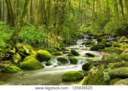 Water cascades over moss covered rocks in Great Smoky National Park.