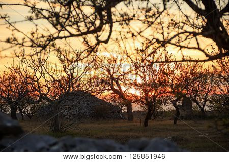 Apulian countryside. Rural landscape at sunset: trullo among trees. Italy.Typical rural Apulian landscape