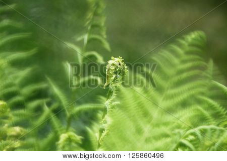 Green fern background. Photo with soft filters. monocle style