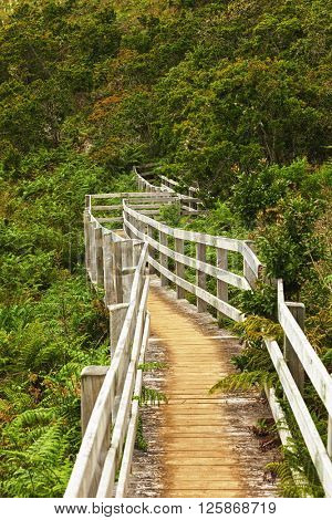 Winding wooden path vanishing in a subtropical forest