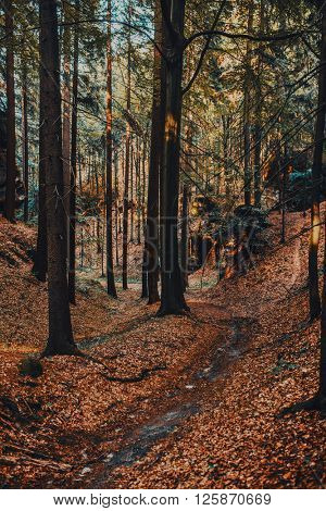 Wild forest in mountains in Czech. Red autumn film style colors.