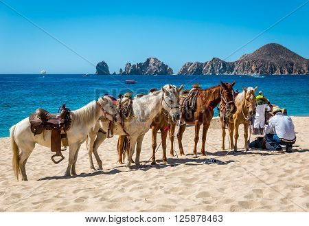 Cabo San Lucas, Mexico- April 27/2016 : A Mexican vaquero tends to his horses on a resort beach in Cabo San Lucas as he whats for tourist customers.