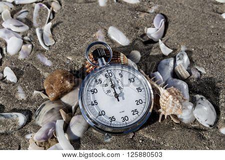 Scallops And Chronometer