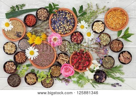 Large medicinal herb and flower selection used in natural alternative medicine over distressed wooden background.