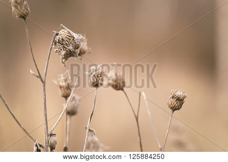 dry bur grass on rural field in early spring, shallow focus