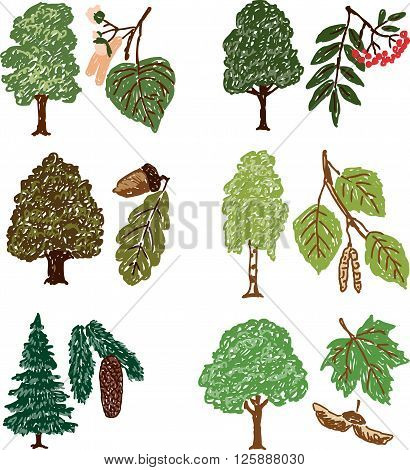Vector drawing of the different forest trees with their fruit.