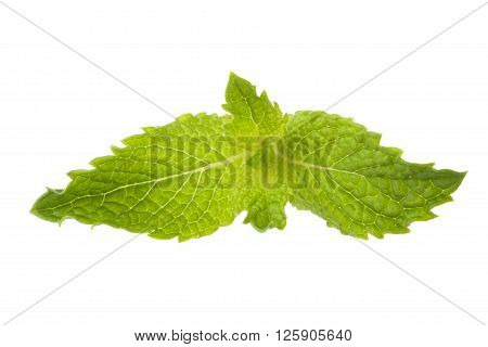 Image of mint leaf isolated on white background