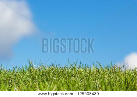 Green grass with clear blue sky bright with couple of clouds close up macro detailed photo on a bright sunny morning day