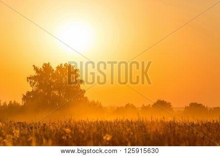 Orange sunset over harvest field in Rusia
