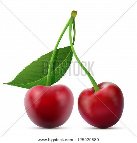 Pair of cherries fruits close up. Cherry with leaf isolated on white background. Qualitative vector illustration about cherry agriculture fruits cooking gastronomy etc. It has transparency mask blending modes mesh gradients