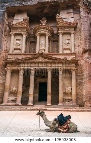 Bedouin camel rests near the treasury Al Khazneh carved into the rock at Petra, Jordan. The city of Petra was lost for over 1000 years. Now one of the Seven Wonders of the Word