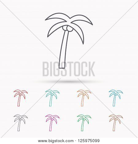 Palm tree with coconuts icon. Travel or vacation symbol. Nature environment sign. Linear icons on white background.
