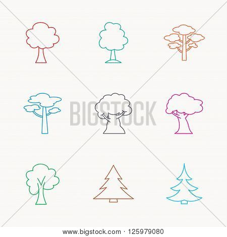 Pine tree, maple and oak icons. Christmas trees linear signs. Forest trees flat line icons. Linear colored icons.